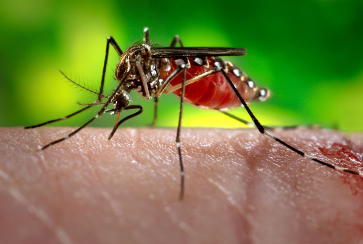thailand-191-1669-dangerous-disease